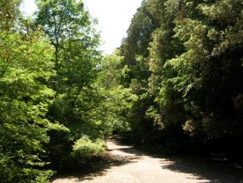 riserva naturale in Puglia