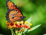 Una casa delle farfalle nel cuore del Salento