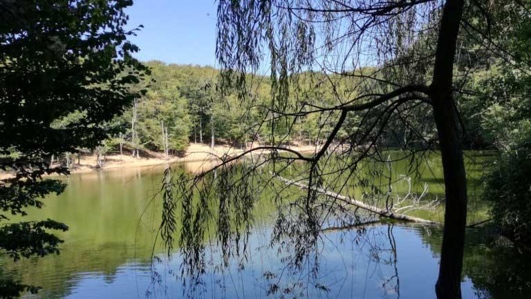La foresta Umbra a Vieste