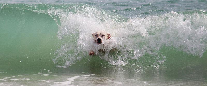 spiagge in Puglia per cani