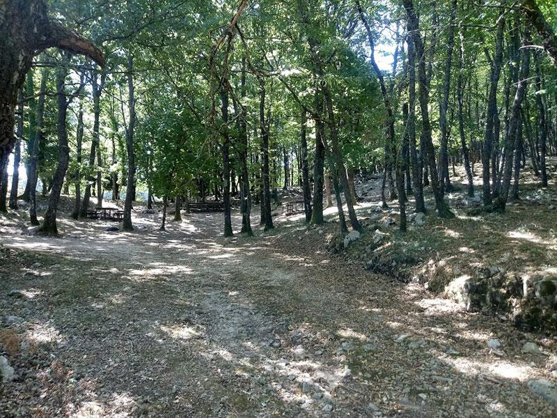 Gargano boschi