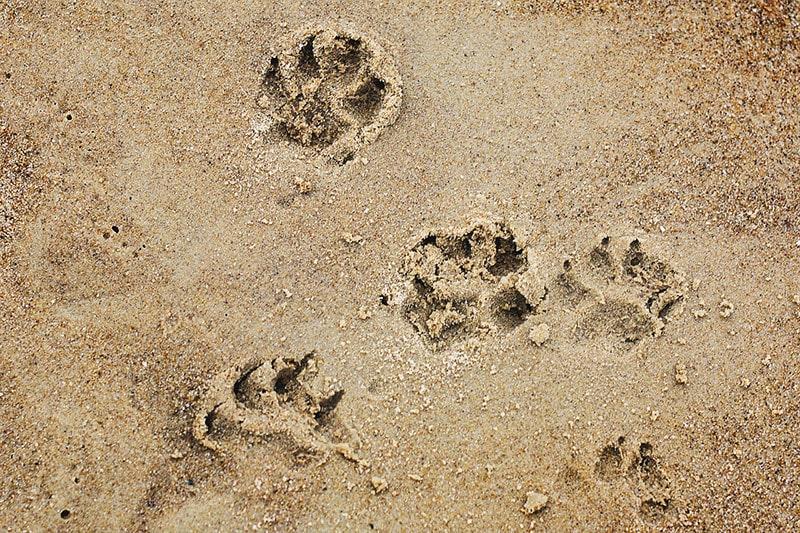 spiagge cani Puglia